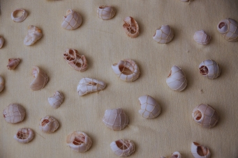 States of Becoming Sand (detail), periwinkle shells and thread on pillowcase, © Amanda Wagstaff 2016